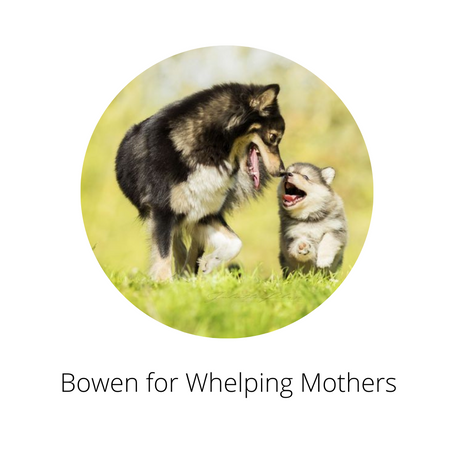 Bowen for Whelping Mothers