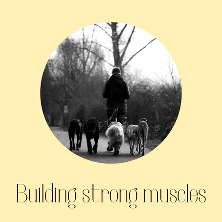Building strong muscles