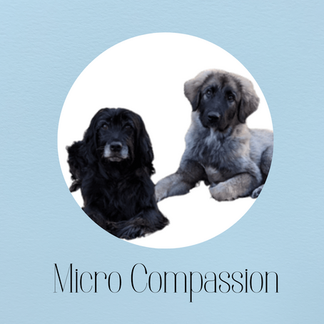 Micro compassion