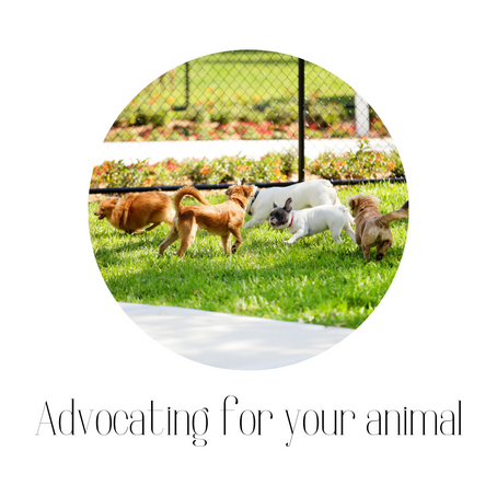 Advocating for your animal