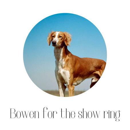Bowen for the show ring