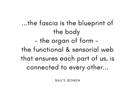 the fascia is the blueprint of the body