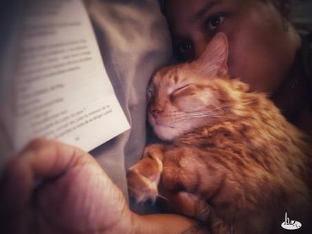 🐾 Histoire(s) de chat(s)... des mots et des chats : vocabulaire 🐾