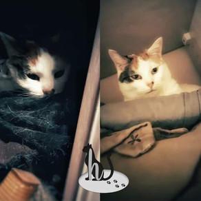 🐾 L'instant F(o)urbaby de... Kara : les cachettes 🐾