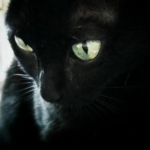 🐾 Histoire(s) de chat(s) : Chats noirs 🐾