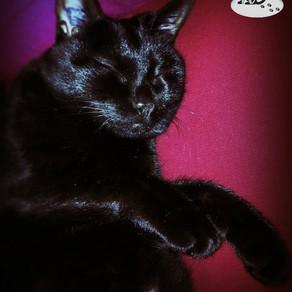 🐾 L'instant F(o)urbaby de... Chanel : le sommeil 🐾