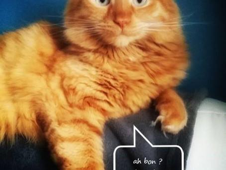 🐾 Histoire(s) de chat(s) : l'ailurophobie🐾