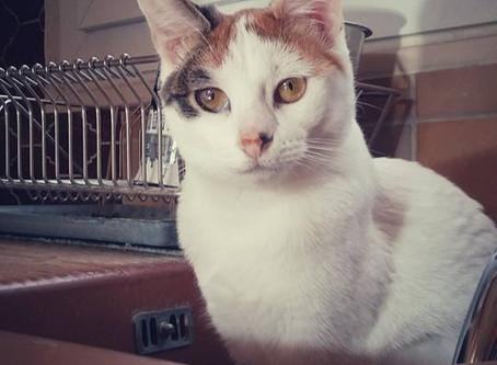 🐾 L'instant F(o)urbaby de... Kara : les chats qui aiment l'eau🐾