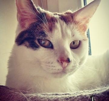 🐾 Histoire(s) de chat(s) : Les ailurophiles célèbres  (Ecrivains et Peintres) 🐾