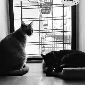 🐾 Histoire(s) de chat(s) : Chats à travers le monde 🐾