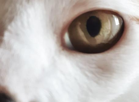 🐾 Histoire(s) de chat(s) : L'Horloge 🐾