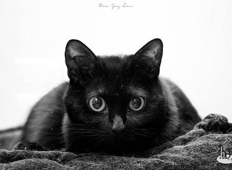 🐾 L'instant F(o)urbaby de... Chanel : l'ouïe (série sur les 5 sens du chat)🐾