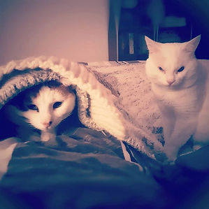 🐾 My 2 lil ones 🐾 _#catstagram #karala