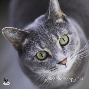 🐾 Histoire(s) de chat(s) : Chloe the Happy Cat 🐾