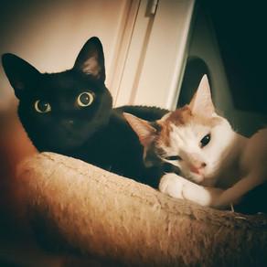 🐾 Histoire(s) de chat(s) : RACONTEZ MOI LES VÔTRES ! (3ème édition)🐾