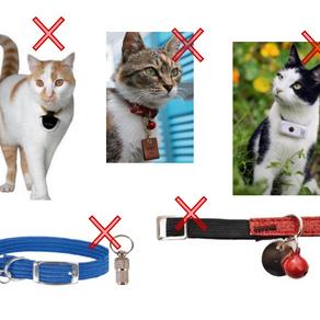 Par pitié : arrêtez de mettre des colliers à vos chats !