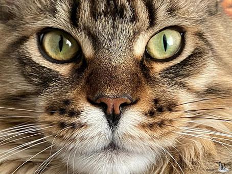 🐾 Histoire(s) de chat(s)...de race 🐾