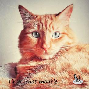 🐾 Histoire(s) de chat(s) : Les ailurophiles célèbres (Hommes/ Femmes du monde) 🐾