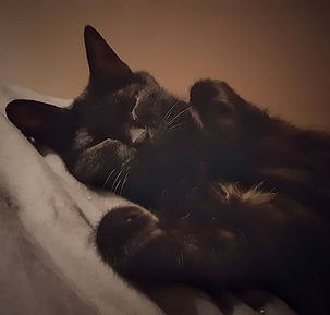 _Câlin du soir, bonsoir_🌜❤ #catstagram