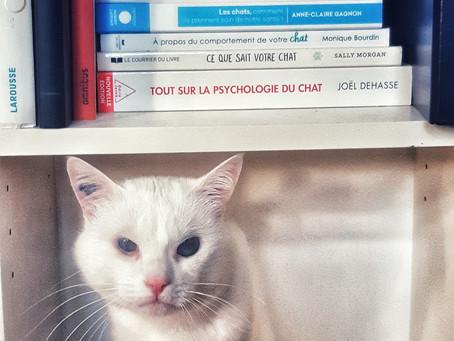🐾 Histoire(s) de chat(s)... des mots et des chats : expressions🐾