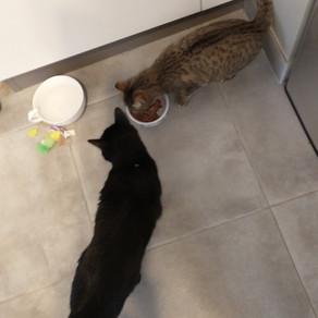 🐾 Histoire(s) de chat(s) : le témoignage d'Isabelle - l'histoire de Gribouille et Nitry 🐾