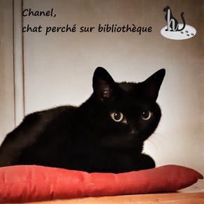 🐾 L'instant F(o)urbaby de... Chanel : routine et changement 🐾