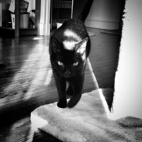 🐾 Histoire(s) de chat(s)... Le chat dans la mythologie 🐾