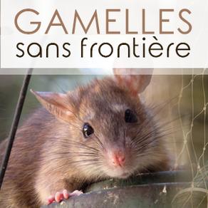 Gamelles sans Frontière : sauver les animaux dans le besoin au-delà des frontières !!!