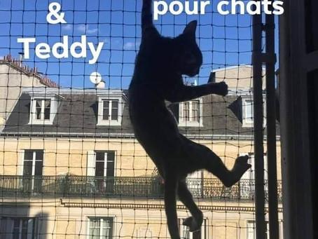 Pour un accès à l'extérieur en toute sécurité pour vos chats, pensez à Bruno et Teddy !
