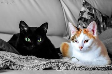 """🐾 Histoire(s) de chat(s) : Les ailurophiles célèbres (Les """"Cats' Ladies"""") 🐾"""