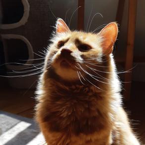 🐾 Histoire(s) de chat(s)... Le chat et la religion 🐾