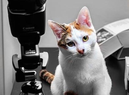 🐾 L'instant F(o)urbaby de... Kara : la vue (série sur les 5 sens du chat)🐾