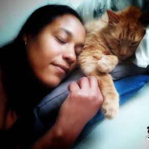 Pour une relation harmonieuse avec votre chat : l'importance du consentement animal...
