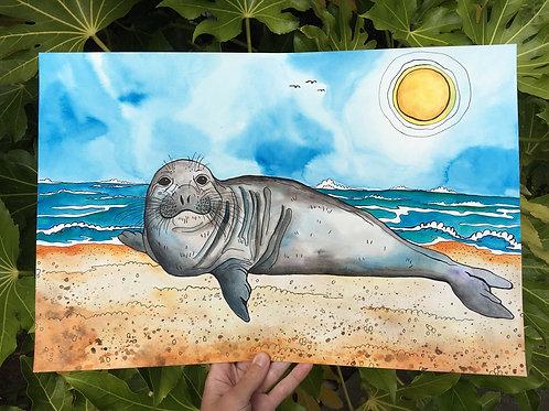 Point Reyes Seal