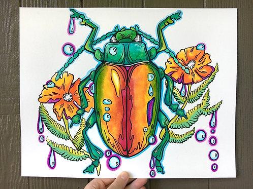 Cali Beetle
