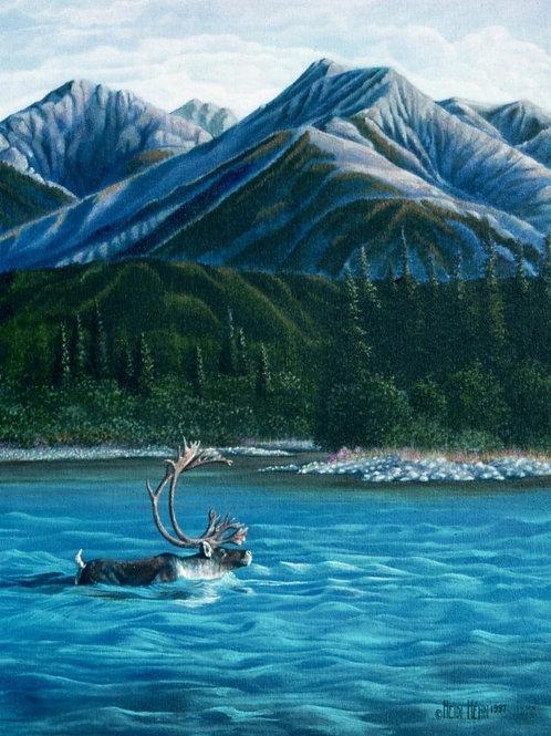 River Wild (Caribou)