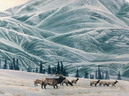 Kusawa Winter (Elk)