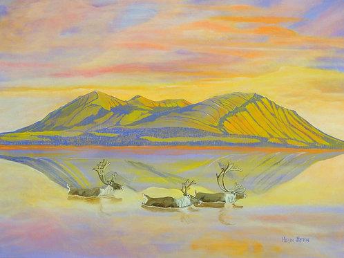 A Quiet Beauty (caribou)