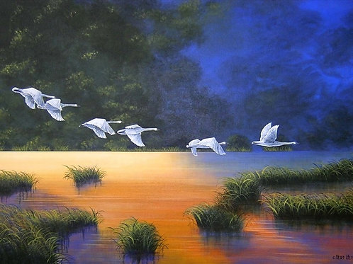 Summer Visitors (Trumpeter Swans