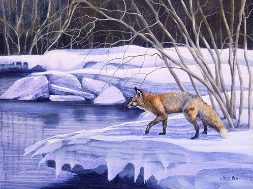 Spring Fox (Red Fox)