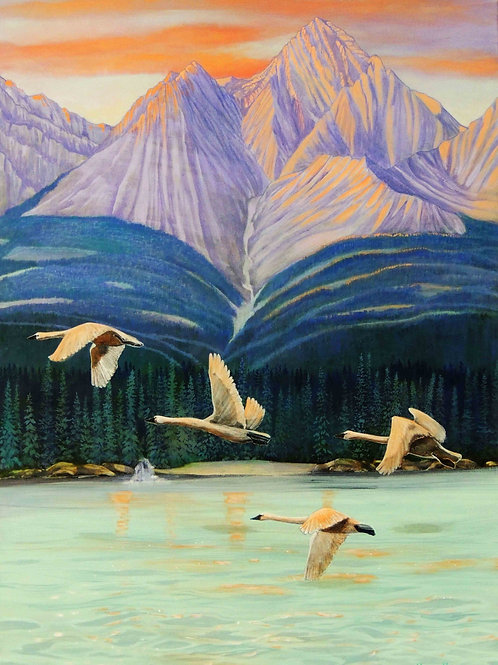 Trumpets Over Tagish (Trumpeter Swans)