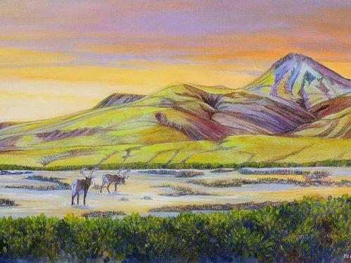 Luminous Land (Caribou)