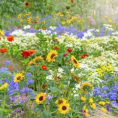 flowers-bloom-in-summer-1586368223.jpg