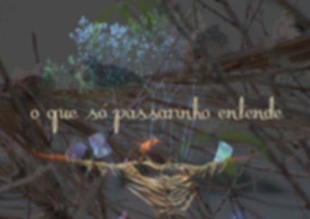 passarinho_capa.jpg