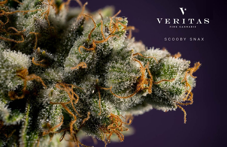 VeritasFramePrint2-01.jpg