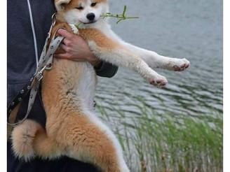 Rendez-Vous des P'tits Loups en Mai 2014