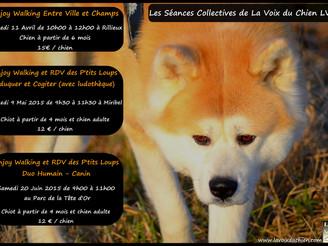 Les Séances Collectives chiots et chiens adultes d'Avril à Juin 2015