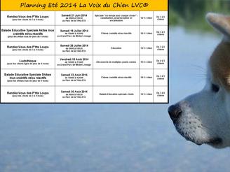 Planning Eté 2014 La Voix du Chien LVC
