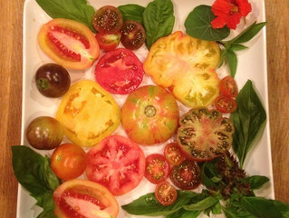 'Maters!!! It's that time - picking the right plants for the season