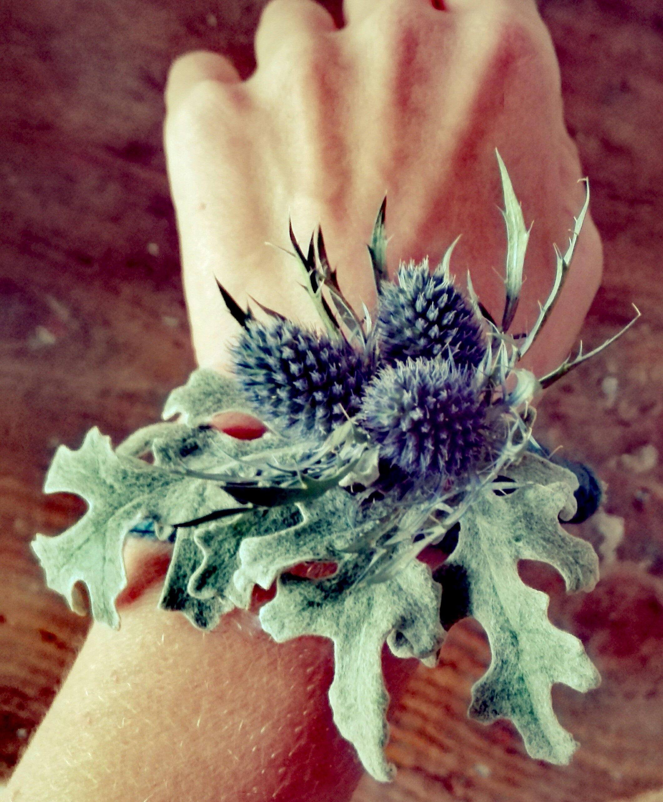 Thistle Wrist Coursage